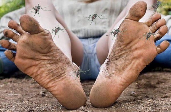 smelly feet mosquito bites